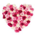 Coeur rose de l'amour